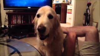 ytmjm humor hunde paarung frau tiere