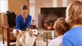 Hund in der Familie