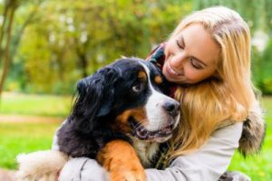 Der Bernhardiner - größte Hunderasse