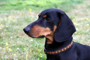 Hundehalsband schick und praktisch