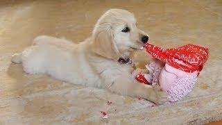 Hunde und Welpen online kaufen: Was Sie beachten sollten