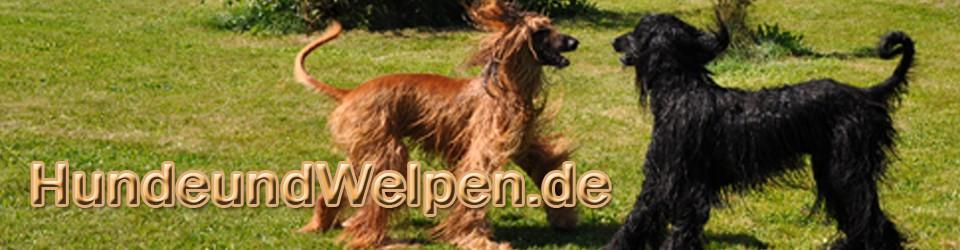 Hunde und Welpen