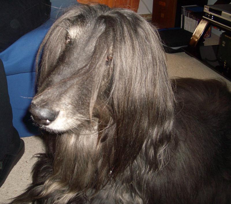 unser alter Hund Saduun