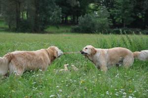 Hunde und ihr Hundespielzeug