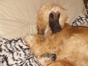 Hunde und Fernsehen