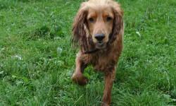 Stadthunde - die richtige Hunderasse für die Stadt