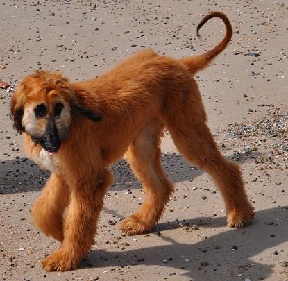 Hundeerziehung an der Leine