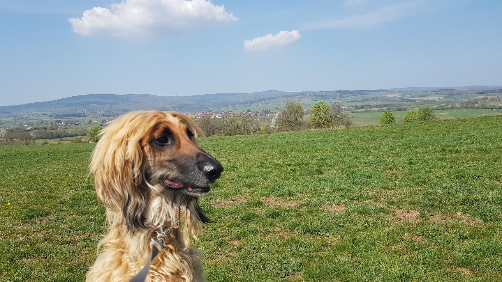 Hund mit langer Nase