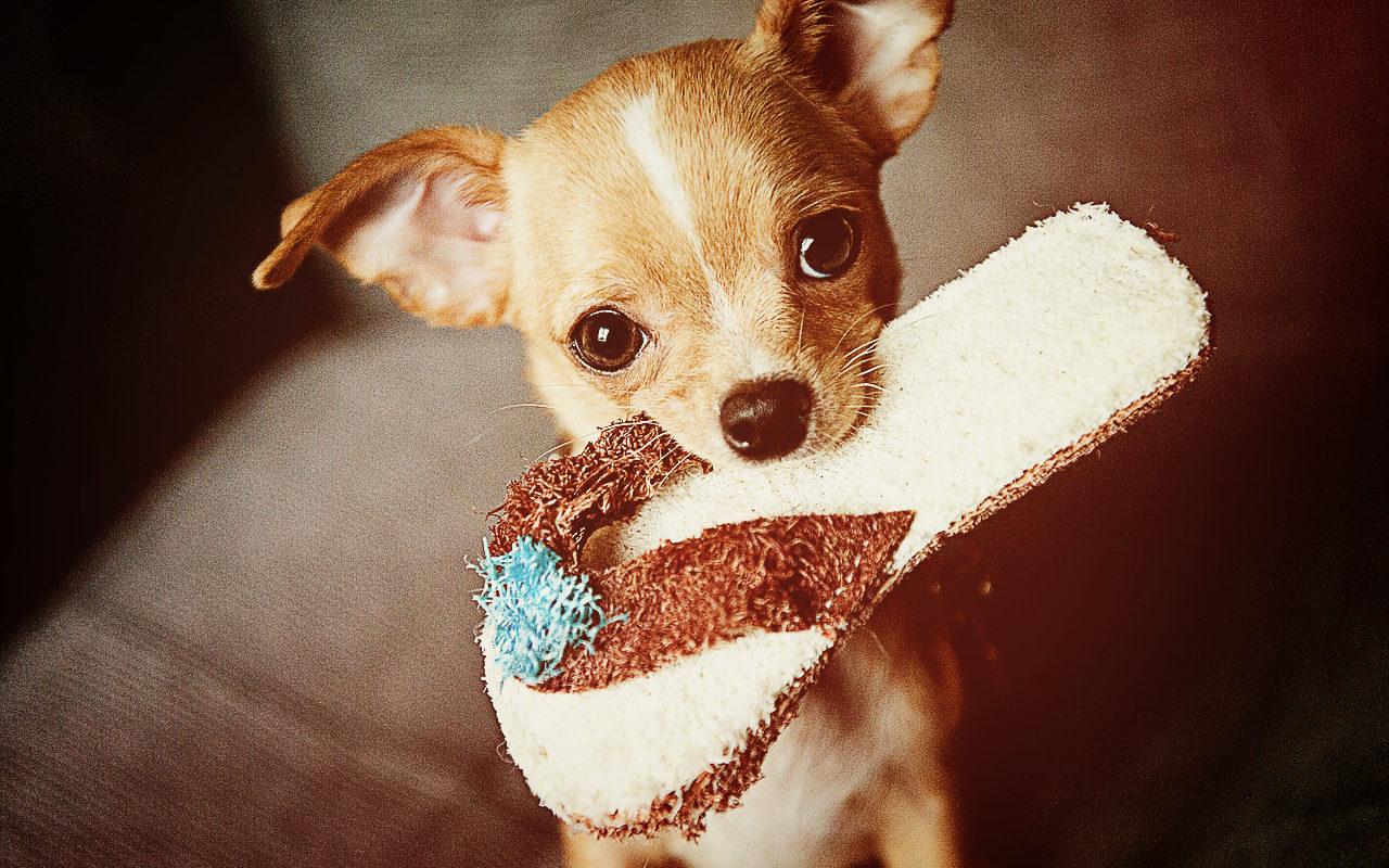 süßer kleiner Hund beim spielen