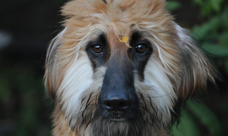 Können auch Hunde Corona bekommen?